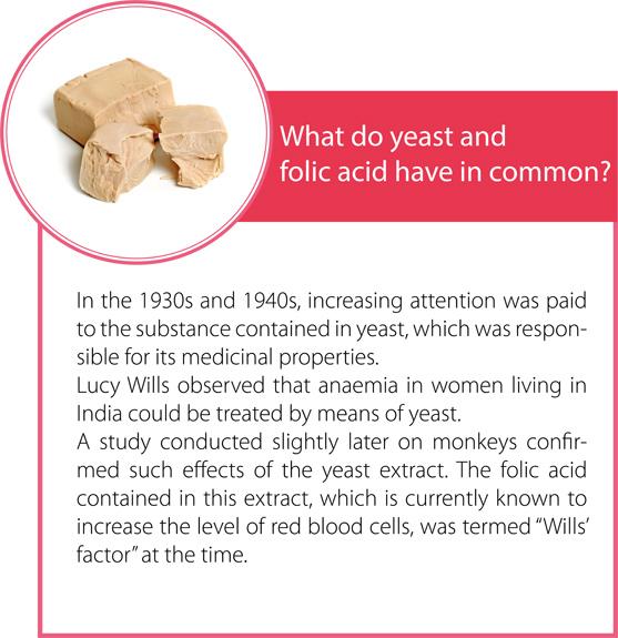 The foundations of healthy pregnancy – folic acid | Composita Mama